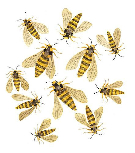 hornet moths by Golly Bard - not quite bees but they'll do