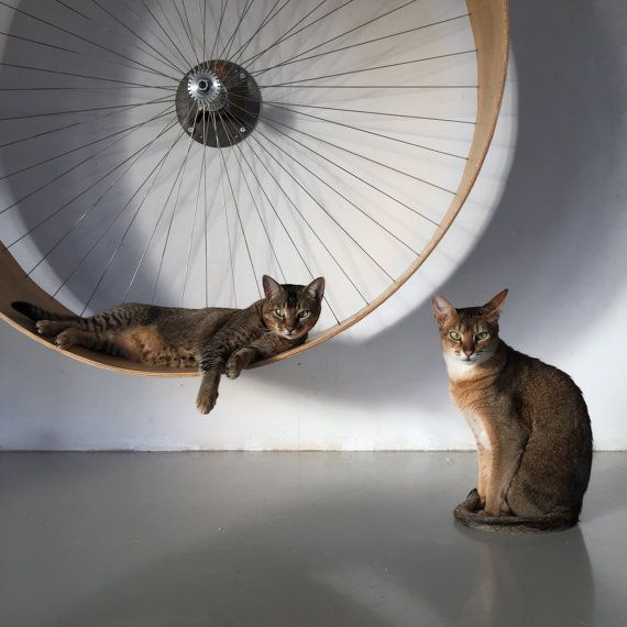 The Cat Wheel designed and manufactured by HolinDesign. The wheel provides great fun and a great activity to your cat. It helps keep your cat a good