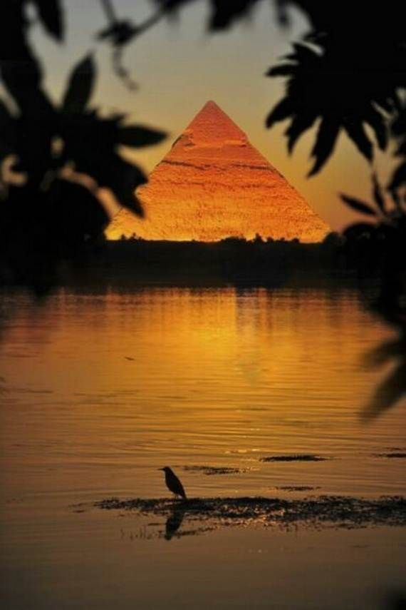 The 25+ best Christmas in egypt ideas on Pinterest   Pretty fish ...