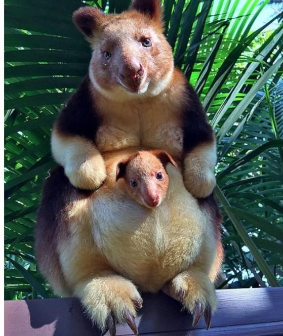 Hallo, kleines Känguru | Ein Beutel voll Glück!