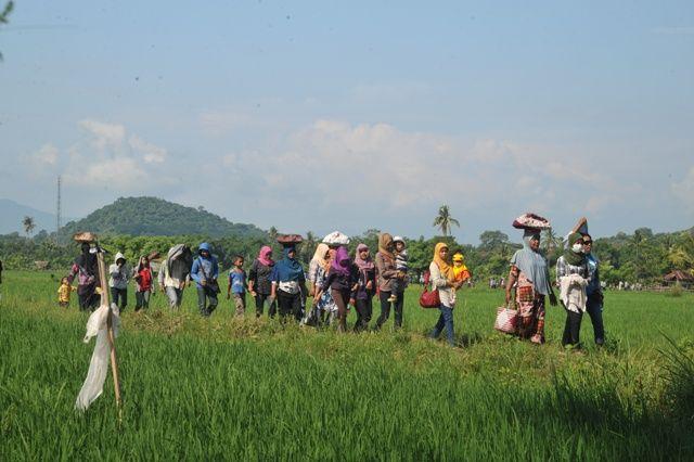 Pesta Ponan merupakan adat dan tradisi yang dulunya dimiliki oleh Desa Bekat atau sekarang telah pecah menjadi lima desa yang ada di Kecamata