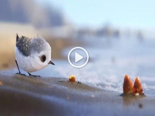 """Il piovanello raggiunge appena i 20 centimetri di altezza. La sua vita? Bella  ma anche faticosa. In estate trascorre gran parte del suo tempo sulle coste  nell'estremo Nord, mentre in inverno molti uccelli migratori raggiungono la  Nuova Zelanda o l'Australia. Sempre alla ricerca di cibo, si nutre di insetti,  molluschi, poche sostanze vegetali. Noioso? Non per Pixar. I cortometraggi  Pixar (Disney) hanno infatti sempre qualcosa di magico. E anche """"Piper"""",  proiettato alla prima del film…"""