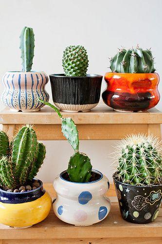 M s de 25 ideas fant sticas sobre cactus tipos en for Tipos de cactus