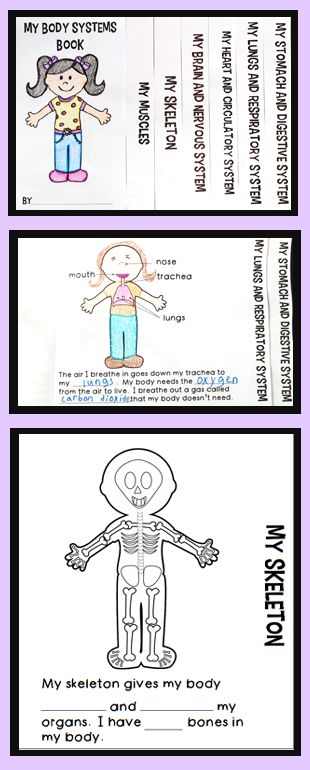 Human Body Systems Flip Book: includes diagrams of different body systems and short text with blanks for students to fill in. The cover page graphic is also blank so students can personalize it. Great addition to a human body unit! $1.25