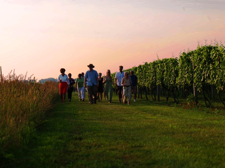 Walk through the Vineyard at Wölffer Estate in Sagaponack, NY in the Hamptons. Vineyard Walk Event on July 18th for Wine Club Members $65. Call 631-537-5107 ext. 10 to join and sign up!: Wine Club, Call 631 537 5107, Vineyard Walks, Vacation Th Hampton, Walks Events, July 18Th, Wölffer Estates, 631 537 5107 Ext, Club Member
