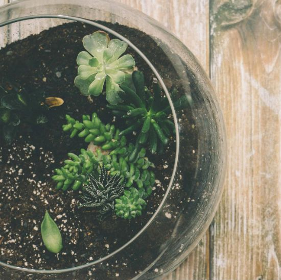 6 Tips to a Greener Lifestyle by Lealou Cooks #greenliving #lifestyle #lifegoals #environment #tips