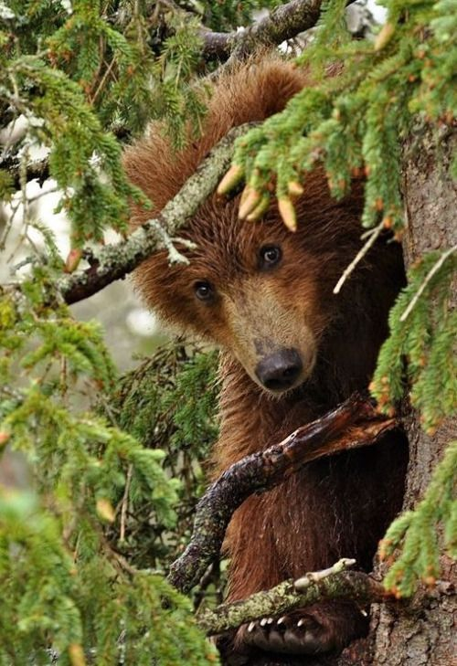 Bearly there hidden in the trees