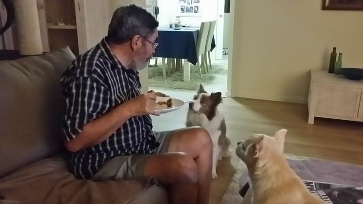 """The """"guilt trip"""" has started ... our boarding fur babies are begging for scraps! - Carol's Contented Critters, PetCare, Currumbin Waters, QLD, 4223 - TrueLocal"""