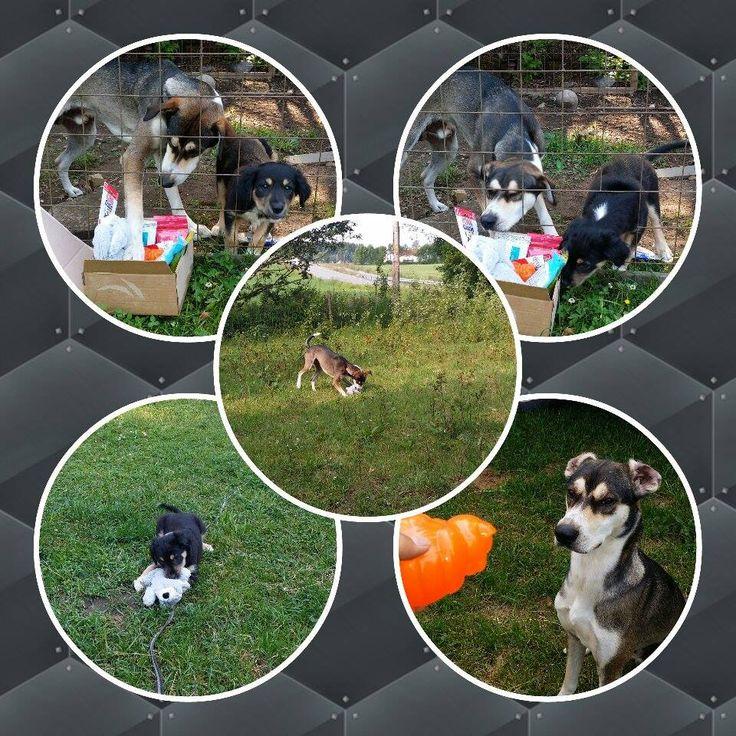 Wiskey, Pirka & Pluggen - DoggieBag.no #DoggieBag #Hund