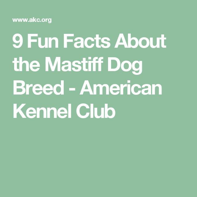 9 Fun Facts About the Mastiff Dog Breed - American Kennel Club