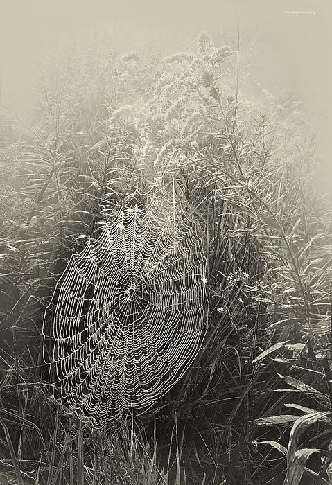 Let is snow - the spider is probably all snugged down somewhere for the winter. Saved to Webs and Weavings