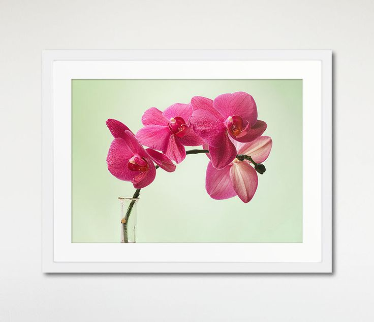 Pink Orchids Framed Art Mint Background Nature by Macrografiks