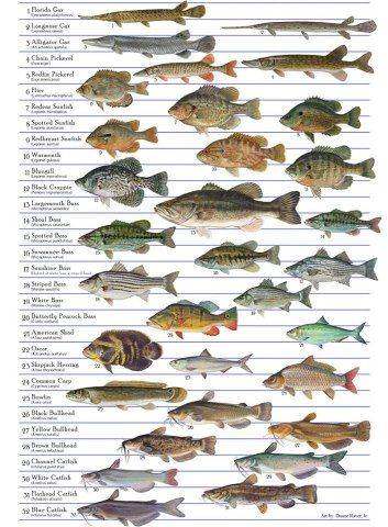 Many species of fish are suitable for aquaculture and aquaponics. Species which have been researched and successfully reared in cages in the southeastern region of the U.S. include:catfish, trout, tilapia, striped bass, red drum, bluegill sunfish,crappie, and carp. As this interest continues to increase,more research into cage culture techniques and alternate species will no doubt occur. We have a PDF you can look at about freshwater species.
