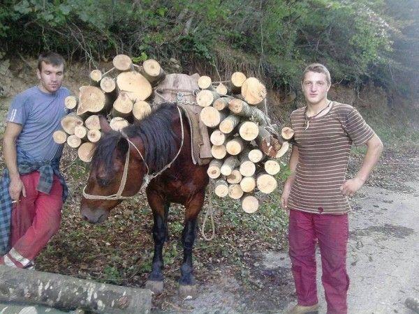 Stop mistreating horses for wood in Velebit mountain range, Croatia! | YouSignAnimals.org