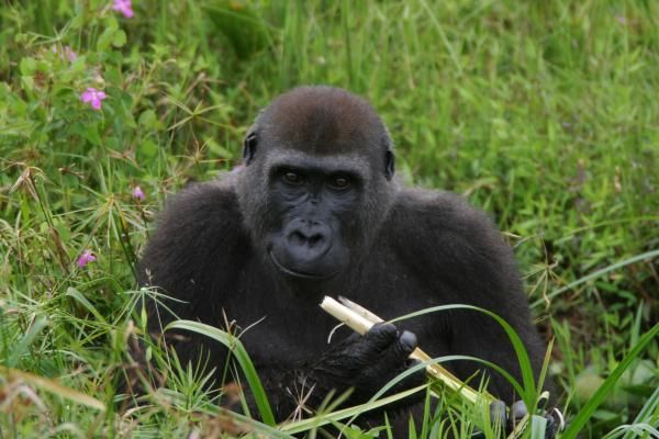 Scientists measure genetic variation among animals transitioning from one species to two: Brooks Hays MONTPELLIER, France, Dec. 28 (UPI) --…