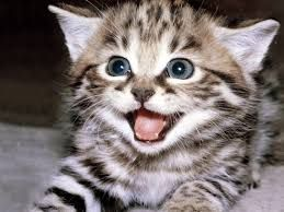 CUTE CAT MEOW sound effects - YouTube