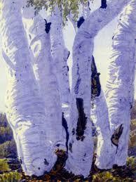 Ghost Gums, central Australia