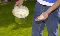 Kalium ist der Hauptbestandteil der sogenannten Herbstdünger. Es wird im Zellsaft eingelagert und steigert die Frosthärte der Gartenpflanzen. Von August bis in den Frühherbst können Sie Ihre Pflanzen mit geeigneten Düngern versorgen.
