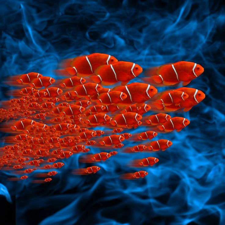 It 39 s a beautiful world bright orange fish with white for 94 1 the fish