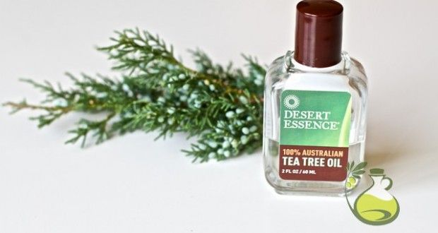 Tea Tree Oil For Fleas Removal The Fastest Way To Get Rid