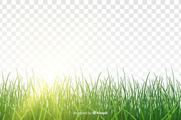 Download Green Grass Border Realistic Design For Free Grass Silhouette Grass Seamless Grass