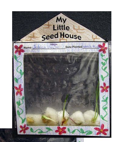 Spring Book 10: The Tiny Seed