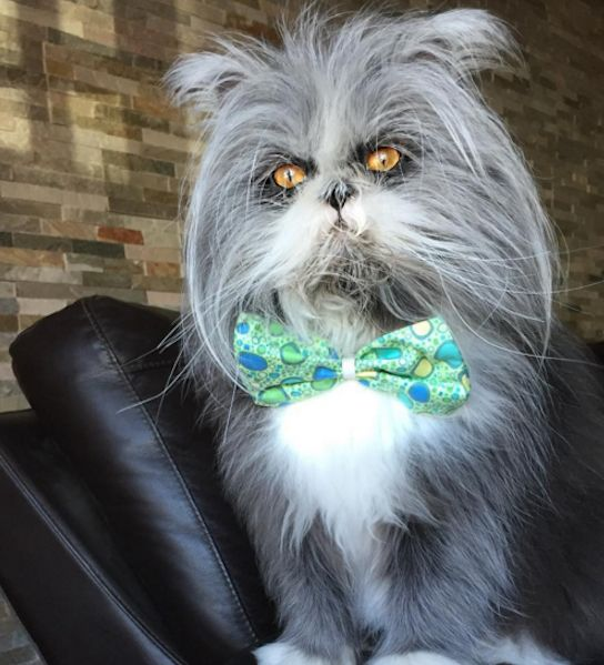 Aww! Atchoum was born with hypertrichosis, which means his hair excessively grows, giving him a very... - Mom.me