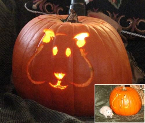 Small animal pumpkin carving ☺☺☺ the best guinea pig