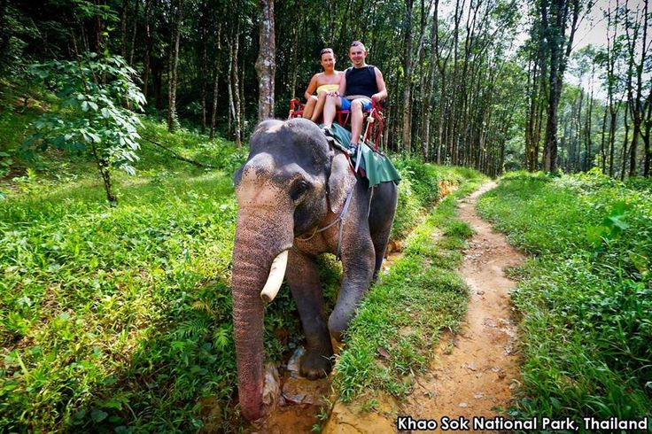 Travel, at its best, presents one-of-a-kind experiences. How does an elephant-back safari sound? View Khao Sok National Park's natural splendor from this high-as-an-elephant's-eye perspective—300 bird species, gibbons, giant flowers and even tigers reside here. You'll never forget it!