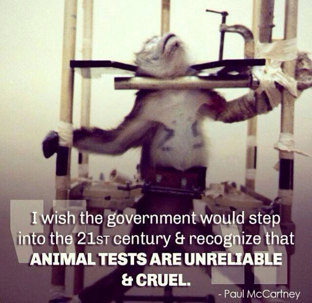 is animal testing cruel or necessary Animal testing has left the world divided into two - those who feel it is necessary, and those who don't within those who feel it is necessary, there exists a group of people who believe that this practice is justified only in case of medical research.