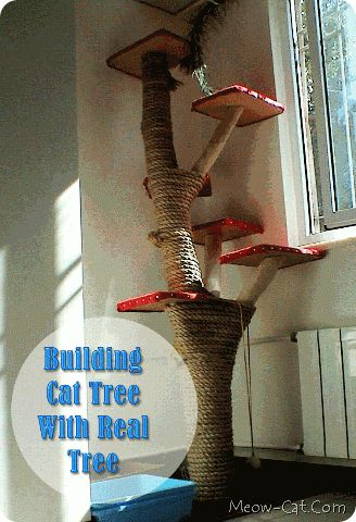Building a Cat Tree with a REAL Tree. No blog link but it looks pretty self explanatory
