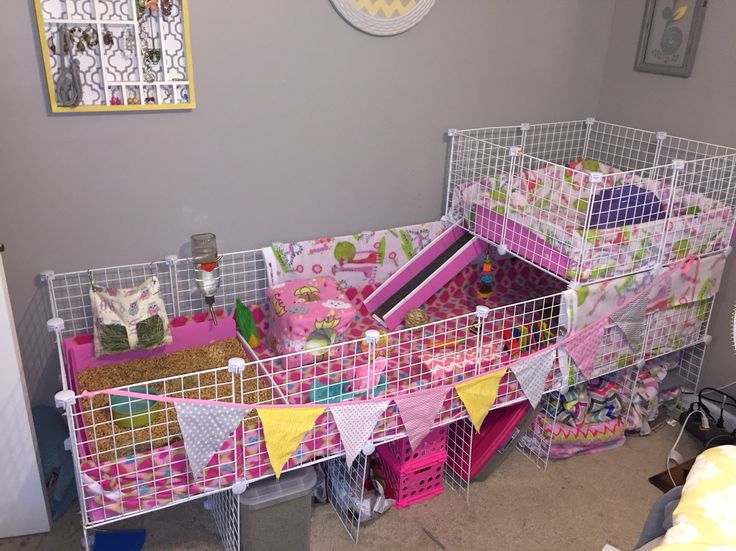 The 25 best ideas about indoor guinea pig cage on for How to guinea pig cage