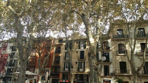 Palma de Mallorca ❤