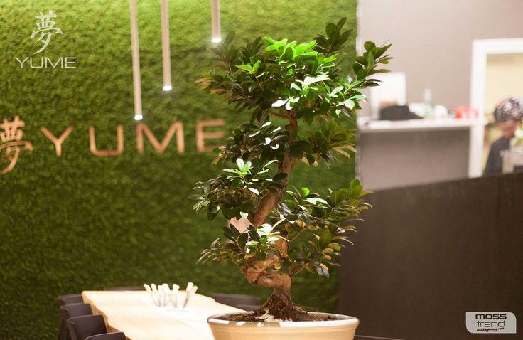 Kolejna z realizacji oryginalnego #mchu Moss Trend®. Tym razem japońska restauracja #Yume i piękna zielona ściana z mchu. Więcej zdjęć wkrótce.