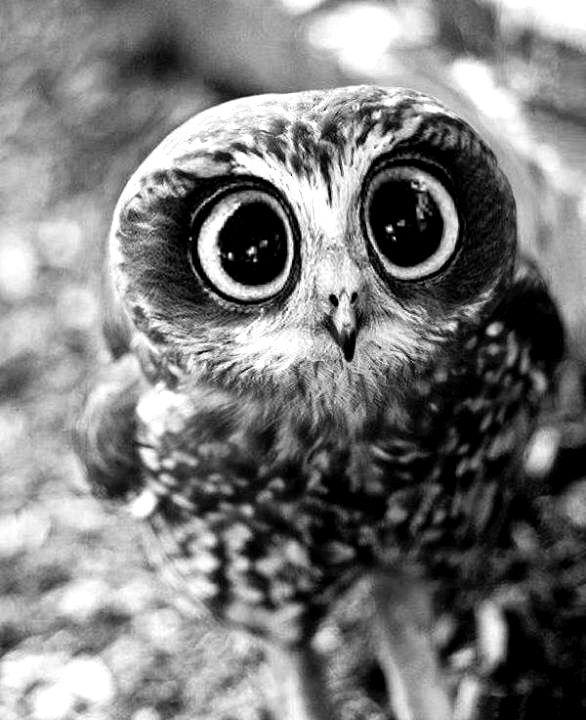 Oh ... those eyes ....