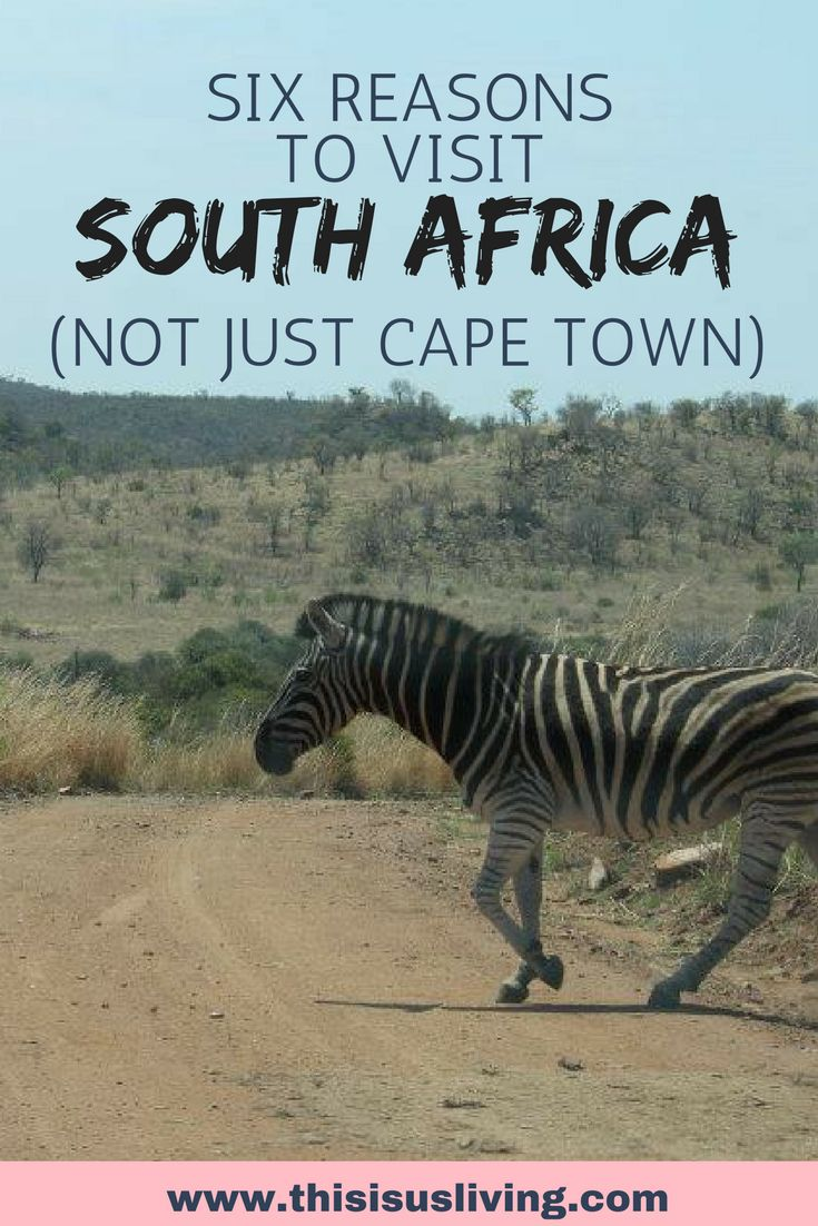 Travel to South Africa, here are 6 reasons why you need to get there!