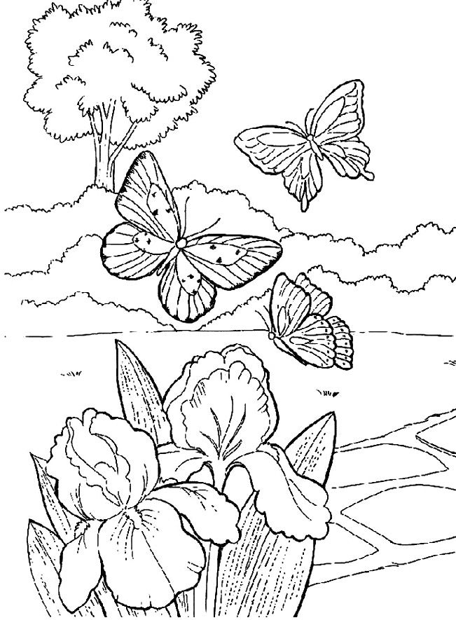 Beautiful Butterfly In The Garden Coloring Pages