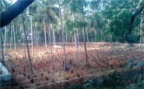 Commercial Land For Sale in Calicut | 109 Cent | 51868066 - Nanu Bhai Property
