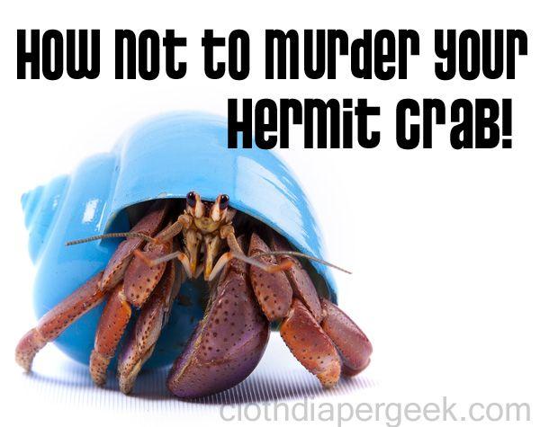 HILARUIOUSLY MORBID hermit crab care