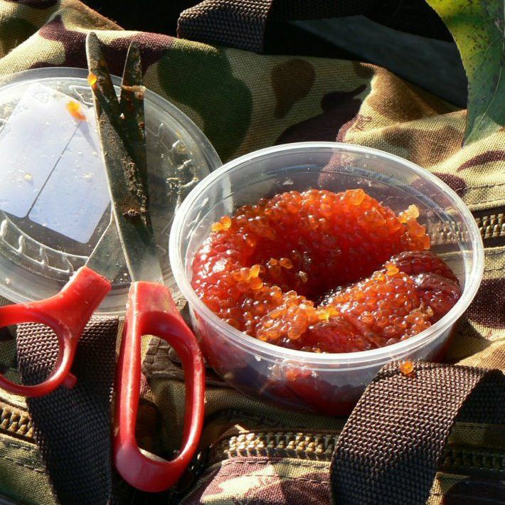 how to smoke fish roe