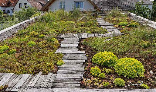 Auch begrünte Dächer können wertvolle Lebensräume darstellen. (Natugarten Dachbegrünung Dachbepflanzung begrünte Dächer wildlife garden roof  greened roofs)