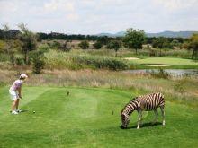 Limpopo Golf and Safari Route