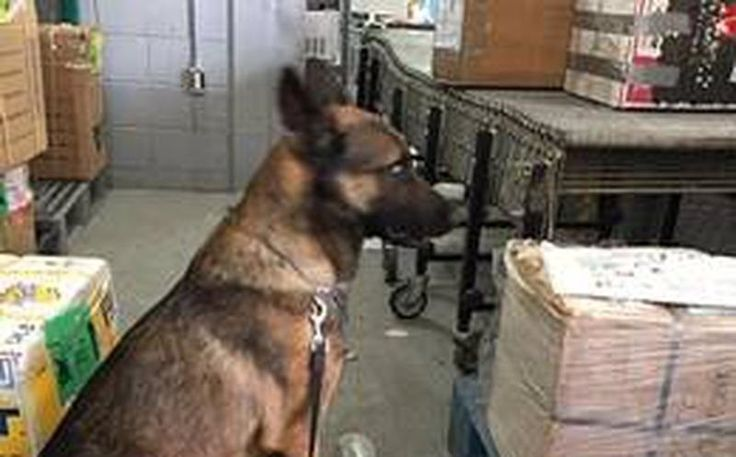 """En un operativo realizado en una empresa de paquetería con razón social """"Empaques del Sur"""" por personal de la PGR, con apoyo de la Unidad Canina, se logró el aseguramiento ..."""