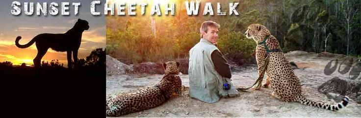Come walk with our cheetahs through indigenous Tsistikamma Forest and Cape Floral Fynbos....