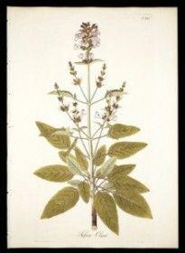 Receta casera para oscurecer el cabello. Salvia, agua, clavos (especias) molidos, henna y té negro.