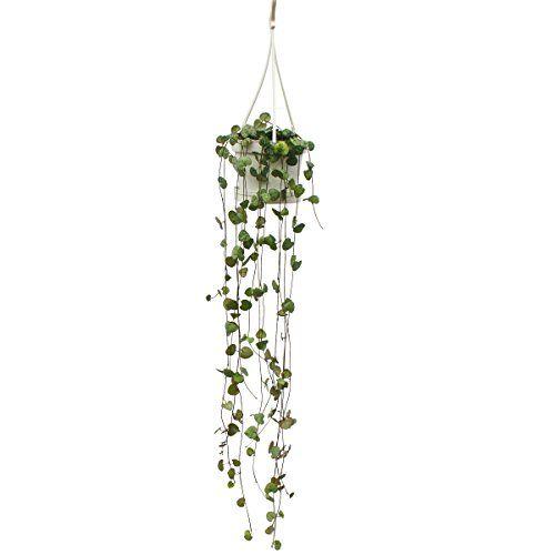 284 besten zimmerpflanzen bilder auf pinterest. Black Bedroom Furniture Sets. Home Design Ideas