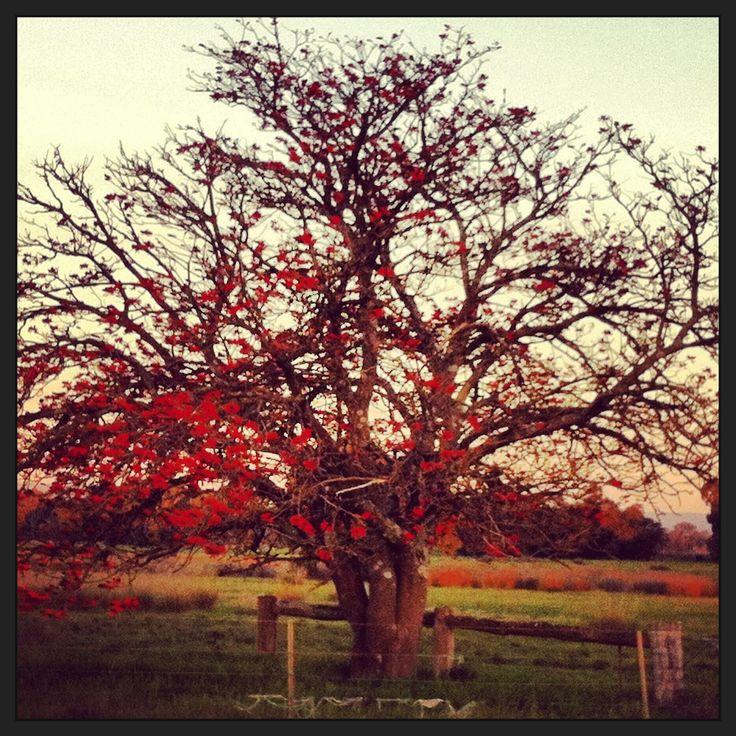 Pretty tree Perth