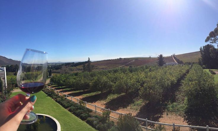 A glass of red wine, the sun and vineyard as far as the eye can see, could we dream of better?  At the Marianne Wine Estate, if the weather is permiting, you can enjoy a delightful tasting outside.  Were already are waiting for you!