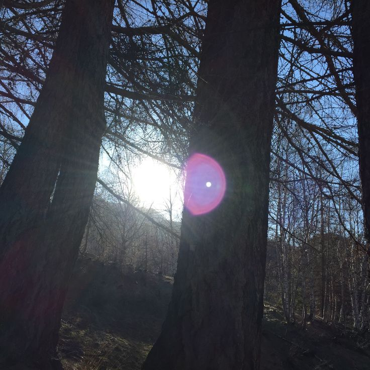 Spring Walk through the woods