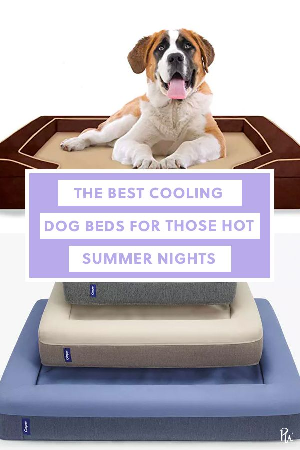 The Best Cooling Dog Beds For Hot Summer Nights Cool Dog Beds